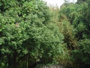 ハウス浦の竹林